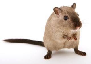 Value Proposition: mouse